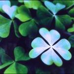 4 leaf clover in blue